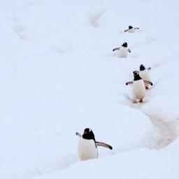Pingwiny wolą Izrael, czyli 72. sesja Zgromadzenia Ogólnego ONZ           [BLISKI WSCHÓD]