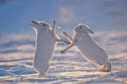 Arktyka – nowy obszar rywalizacji mocarstw?