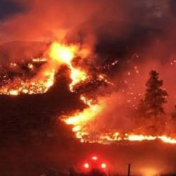"""Wizja katastrofy ekologicznej, czyli płonące """"płuca świata"""""""